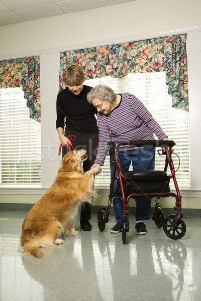 Elderly woman with therapy dog. Stock photo © iofoto