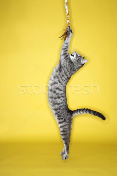 Grijze kat springen speelgoed grijs gestreept kat Stockfoto © iofoto