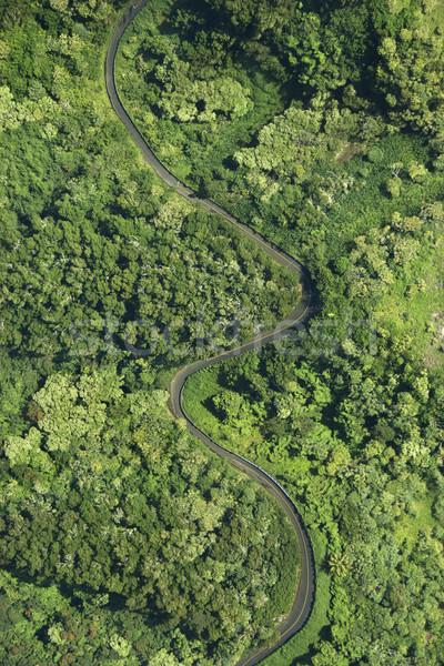Road through forest. Stock photo © iofoto
