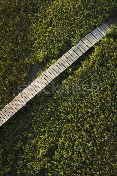 Boardwalk over marsh. Stock photo © iofoto