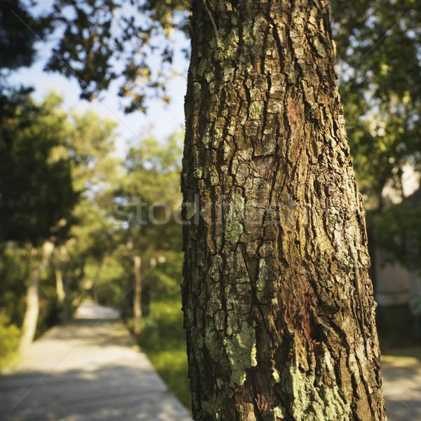 Tree and sidewalk. Stock photo © iofoto