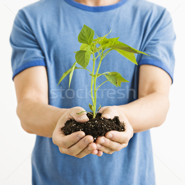 Man holding plant. Stock photo © iofoto