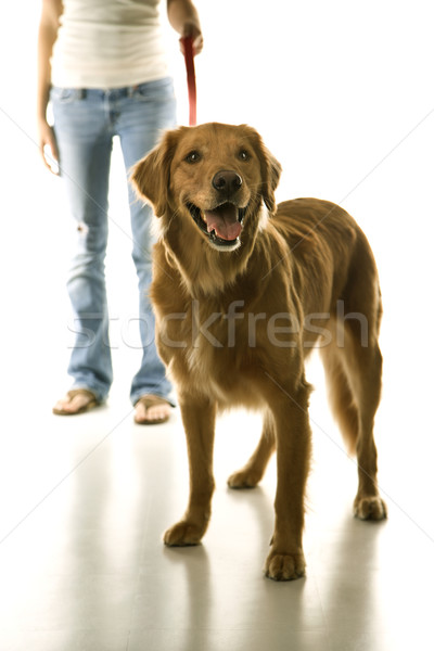 Dog on leash with girl. Stock photo © iofoto