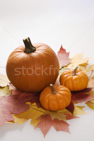 Fall still life. Stock photo © iofoto