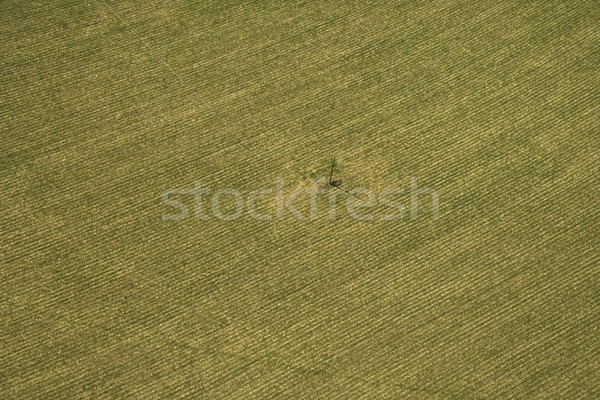 Cropland. Stock photo © iofoto