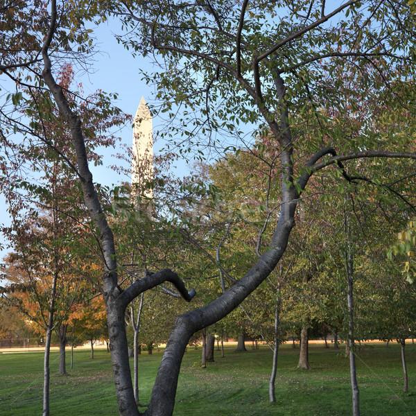 Washington Monument Washington DC USA città alberi colore Foto d'archivio © iofoto