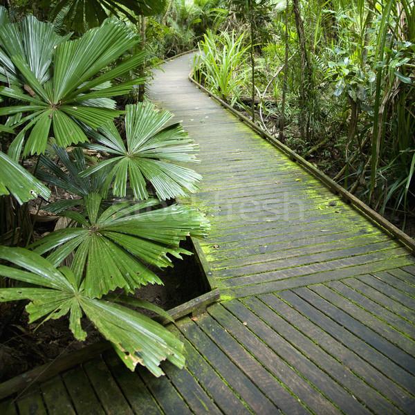 パス 熱帯雨林 木製 オーストラリア 自然 葉 ストックフォト © iofoto