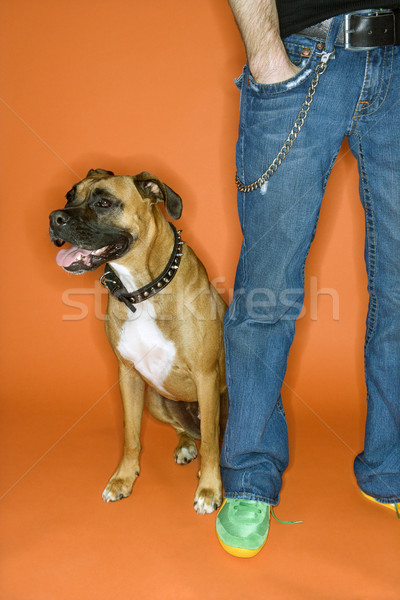 Young man with Boxer dog. Stock photo © iofoto