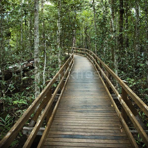 Boardwalk in forest. Stock photo © iofoto
