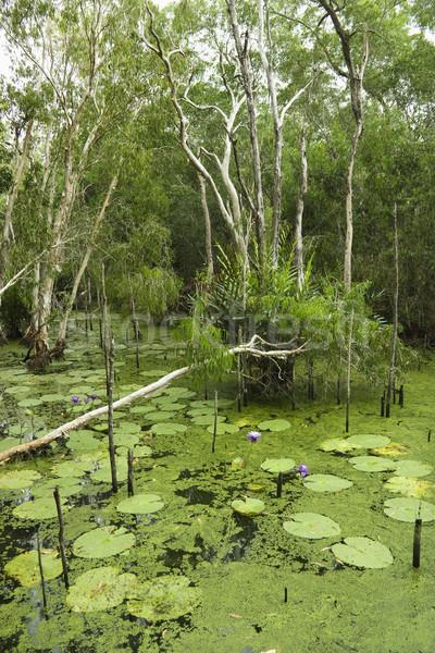 Lush wetlands. Stock photo © iofoto