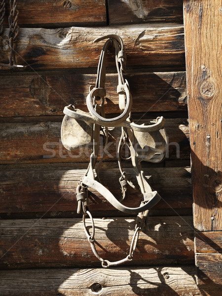 Hanging Bridle with Blinders Stock photo © iofoto