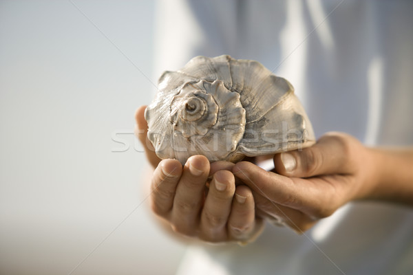 Boy holding seashell. Stock photo © iofoto