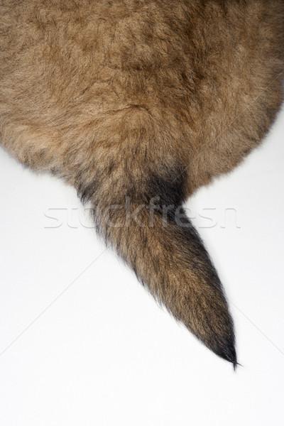 Puppy tail. Stock photo © iofoto