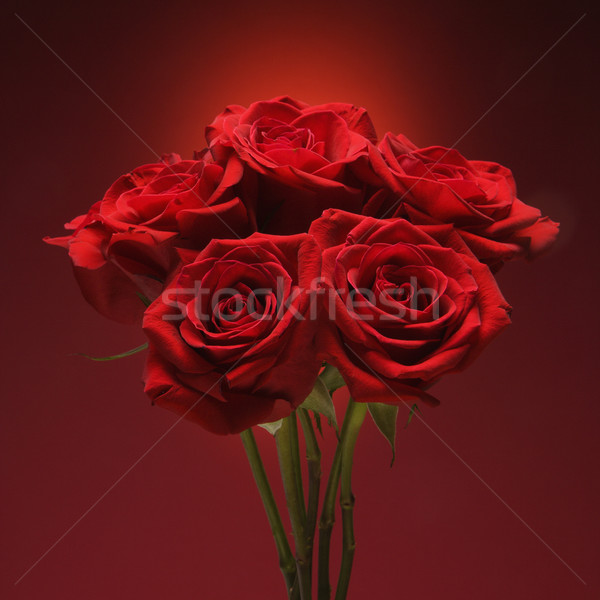 Bouquet of red roses. Stock photo © iofoto