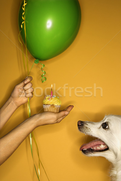 Dog birthday. Stock photo © iofoto