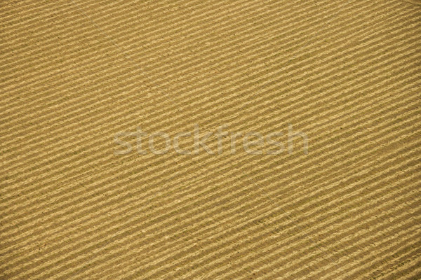 Crop aerial. Stock photo © iofoto