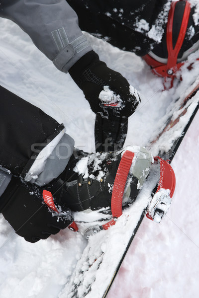 Person strapping on snowboard. Stock photo © iofoto