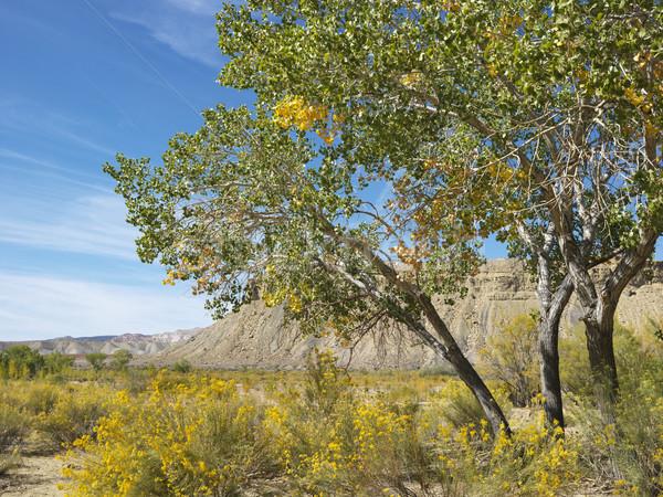 Canyon Utah woestijn landschap boom vegetatie Stockfoto © iofoto