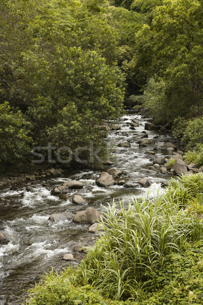 Folyik patak zöld fák természet szín Stock fotó © iofoto