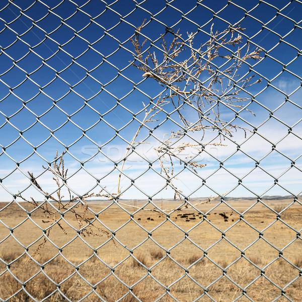 Pennello recinzione panorama vacche piazza Foto d'archivio © iofoto