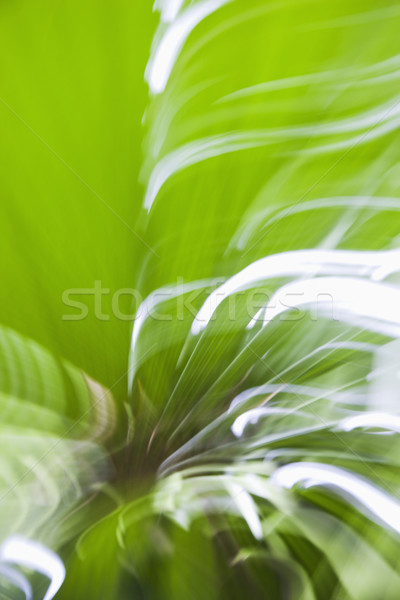 Motion blur. Stock photo © iofoto