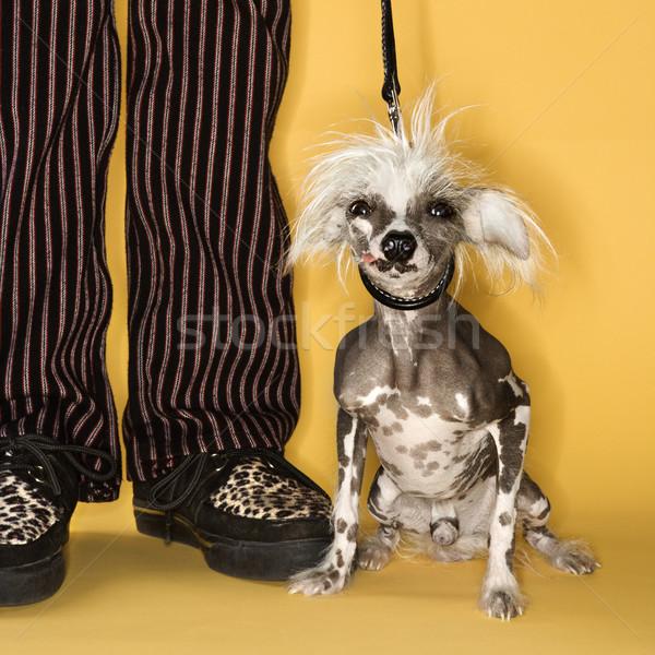 Chinês cão homem coleira em pé moda Foto stock © iofoto