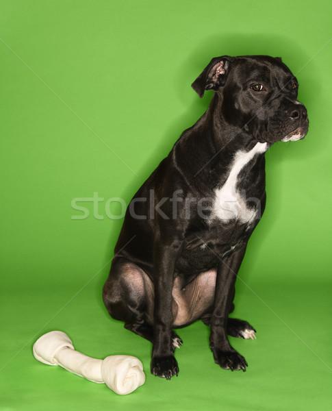Dog with big rawhide bone. Stock photo © iofoto