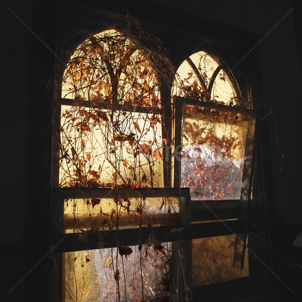 Arched windows. Stock photo © iofoto