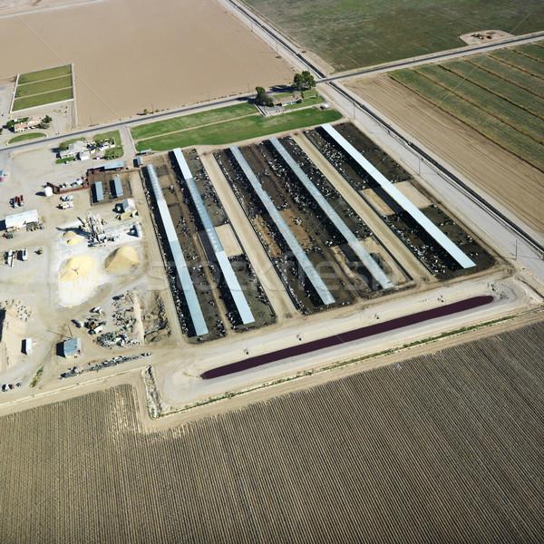 Livestock farm aerial. Stock photo © iofoto