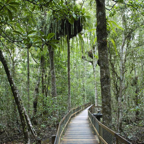Caminho denso floresta floresta Austrália Foto stock © iofoto