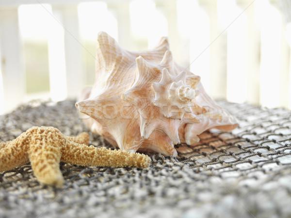 Seashells. Stock photo © iofoto