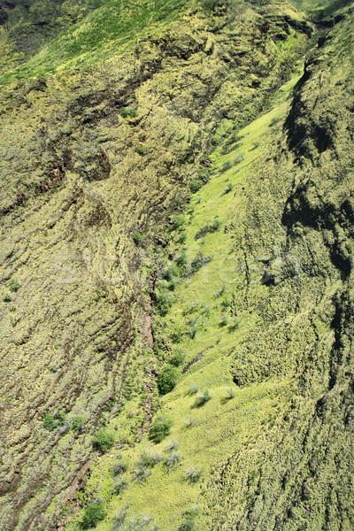 Hawaiian rainforest. Stock photo © iofoto