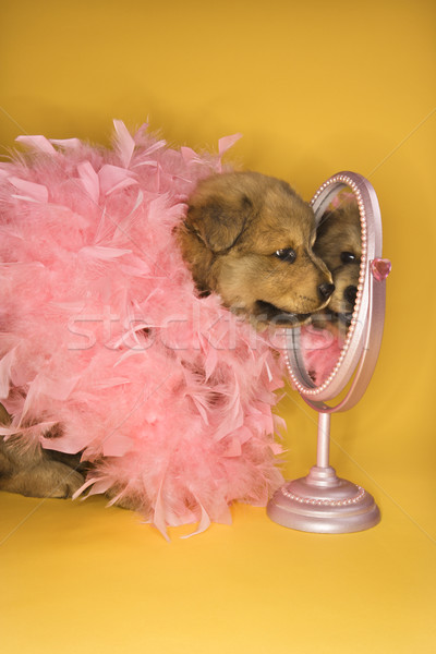 Puppy wearing pink feather boa. Stock photo © iofoto
