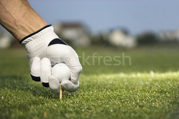 Golfer Placing Tee and Ball Stock photo © iofoto