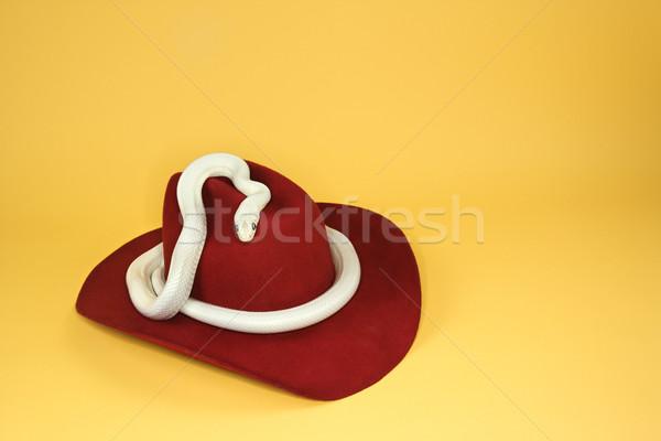 White snake on cowboy hat. Stock photo © iofoto
