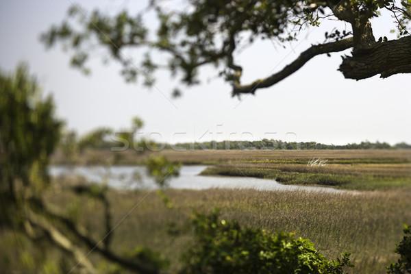 Wetland marsh coastal landscape. Stock photo © iofoto