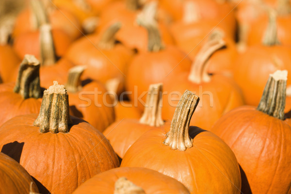 Pumpkins at market. Stock photo © iofoto