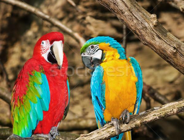 2 木 鳥 熱帯 動物 オウム ストックフォト © Ionia