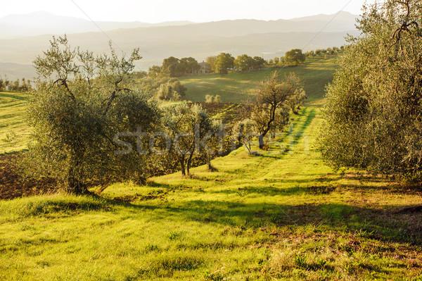 пейзаж Италия типичный Восход природы дерево Сток-фото © Ionia