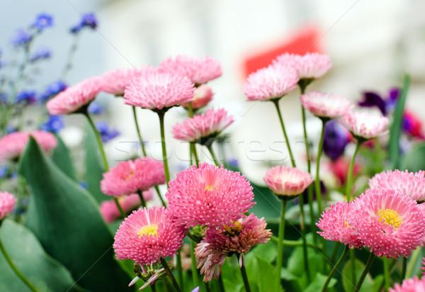 çiçek park bahar doğa alan yeşil Stok fotoğraf © Ionia