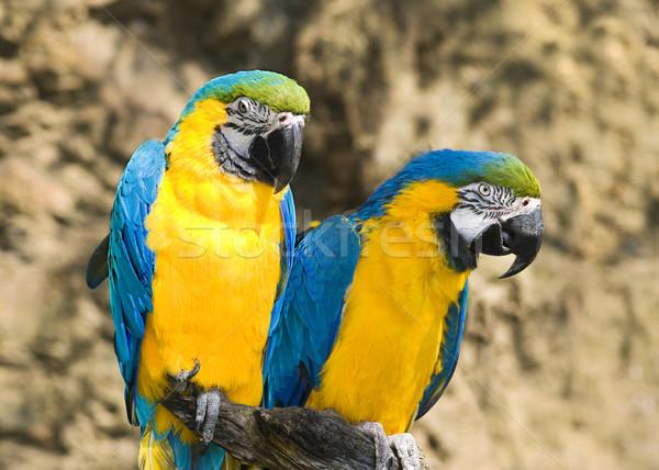 Ptaków tropikalnych zwierząt posiedzenia zoo Praha Zdjęcia stock © Ionia