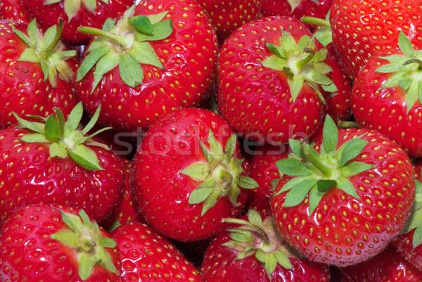 Truskawki świeże owoców zdrowia roślin jedzenie Zdjęcia stock © Ionia