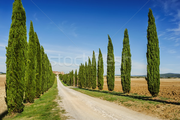 Toszkána út ciprus fák Olaszország utca Stock fotó © Ionia