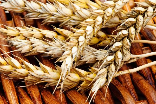 żółty pszenicy nasion zdrowych zbóż organiczny Zdjęcia stock © Ionia