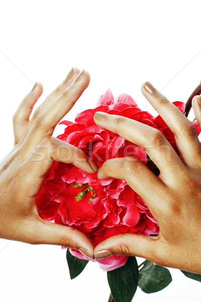 beauty delicate hands with manicure holding flower lily close up isolated on white Stock photo © iordani