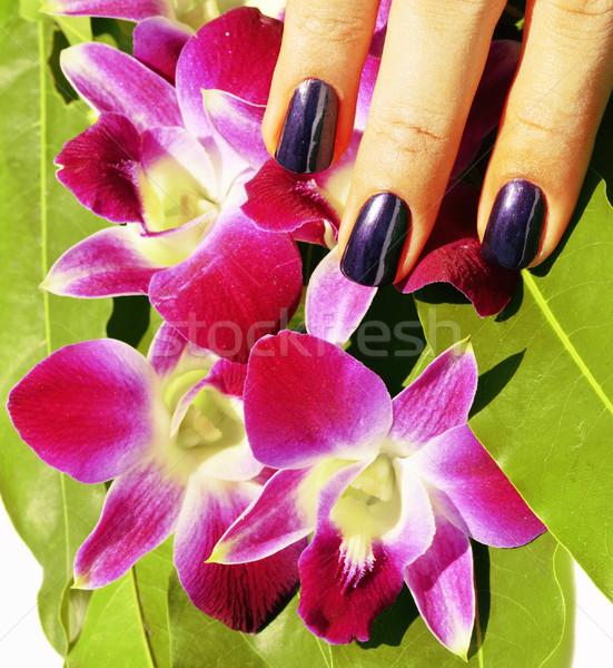 Heldere gekleurd foto manicure orchideeën Stockfoto © iordani