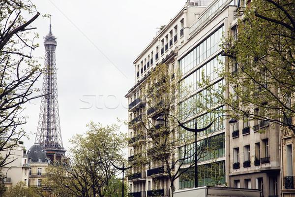 フランス語 パリ 通り エッフェル塔 観点 木 ストックフォト © iordani