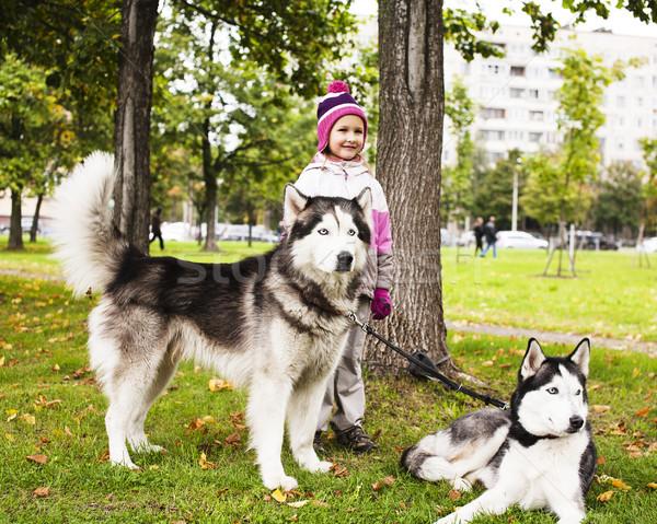 мало Cute девушки играет Husky собака Сток-фото © iordani