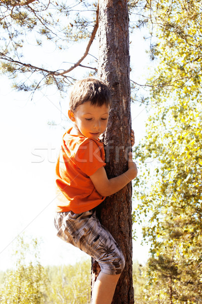 little cute real boy climbing on tree hight, outdoor lifestyle c Stock photo © iordani