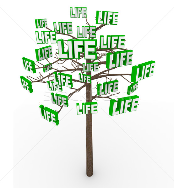 Tree of Life - Natural Growth and Progress in Modern Living Stock photo © iqoncept